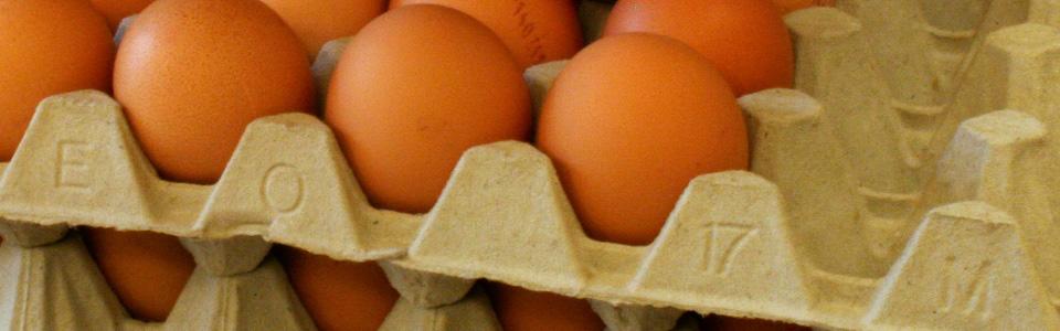 eierec1